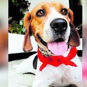 Jornada de adopción de mascotas en Barranquilla