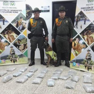 Hallaron 15 kilos de marihuana en una empresa de encomiendas en la calle 30