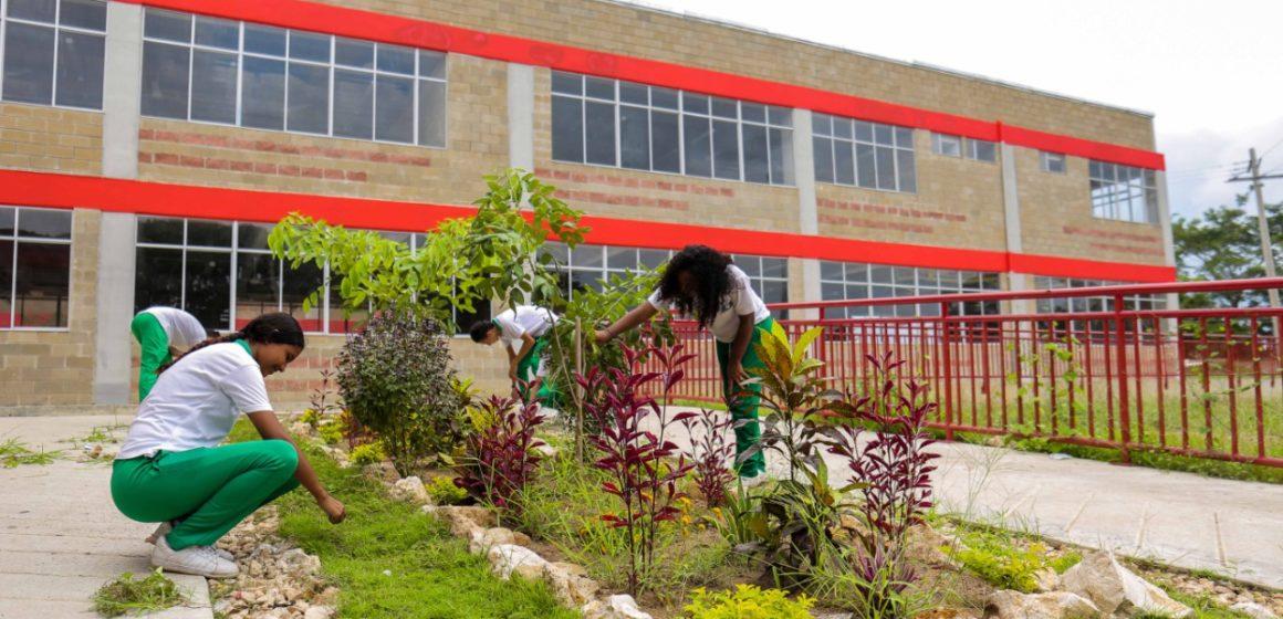 Lluvia de oro, Campanos, Roble amarillo, Bongas, Acacias, Uvita de playa y árboles frutales embellecen los 27 colegios del Gobierno Verano
