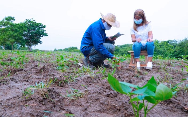 Gobernación inició acompañamiento a agricultores beneficiados con kits de siembra