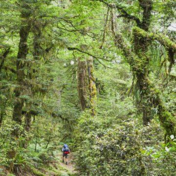 Un millonario busca compañeros para compartir su paraíso en Nueva Zelanda